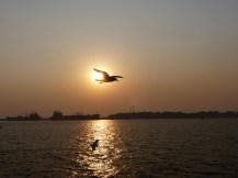 mumbai-sonnenuntergang-moewe-2