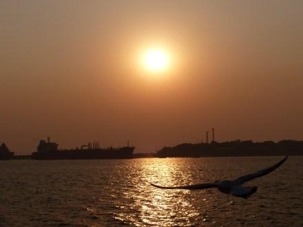 mumbai-sonnenuntergang-moewe