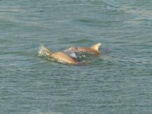 Miami-Delfin-1