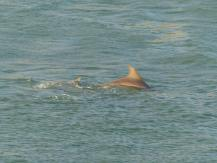 Miami-Delfin-2