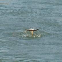 Miami-Delfin-3
