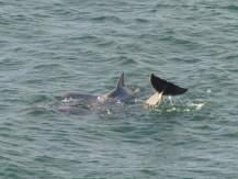 Miami-Delfin-4