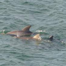 Miami-Delfin-5