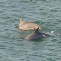 Miami-Delfin-6