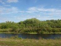 Miami-Everglades-3