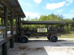Miami-Everglades-Buggy-1