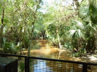 Miami-Everglades-Buggy-4