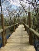 Miami-Everglades-NatureTrail-2