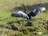 Miami-Everglades-Vogel-1