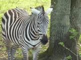 Miami-Everglades-Zoo-1