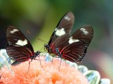 Key_West-Butterfly_Garden-10