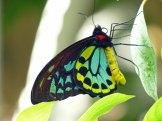 Key_West-Butterfly_Garden-11