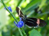 Key_West-Butterfly_Garden-12