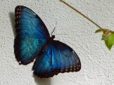 Key_West-Butterfly_Garden-13