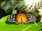 Key_West-Butterfly_Garden-15