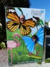 Key_West-Butterfly_Garden-18