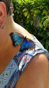 Key_West-Butterfly_Garden-2