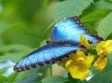 Key_West-Butterfly_Garden-6