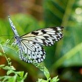 Key_West-Butterfly_Garden-7