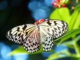 Key_West-Butterfly_Garden-9