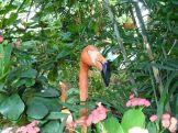 Key_West-Butterfly_Garden-Flamingo-1