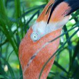 Key_West-Butterfly_Garden-Flamingo-2