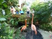 Key_West-Butterfly_Garden-Flamingo-3