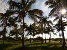 Miami-Oceandrive