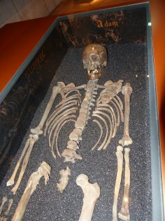stockholm-vasa_museum-skelett-1