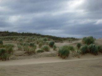 klaipeda-kurische_nehrung-tote_duene-sand-2