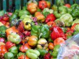 jamaika-bauernmarkt-paprika