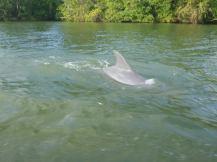 belize-bootsfahrt-belize_river-delfin-2