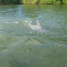 belize-bootsfahrt-belize_river-delfin-3