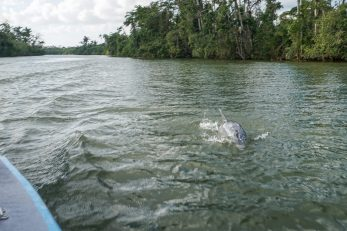belize-bootsfahrt-belize_river-delfin-5