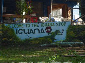 belize-mittagspause-iguana_stop