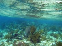 grand_cayman-korallengarten-schnorcheln-1