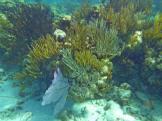 grand_cayman-korallengarten-schnorcheln-2