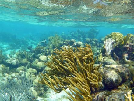 grand_cayman-korallengarten-schnorcheln-3