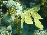 grand_cayman-korallengarten-schnorcheln-4