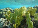 grand_cayman-korallengarten-schnorcheln-5