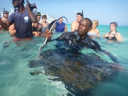 grand_cayman-stingray_city-rochen-3