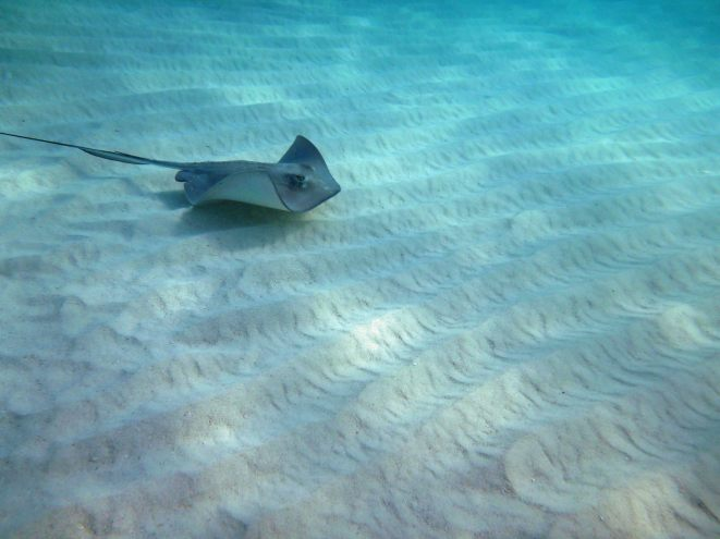 grand_cayman-stingray_city-rochen-5