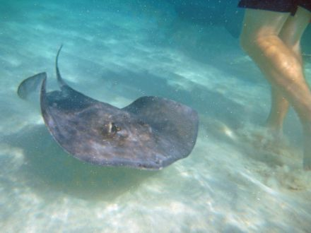 grand_cayman-stingray_city-rochen-6
