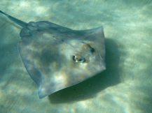 grand_cayman-stingray_city-rochen-7