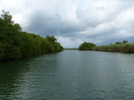 Jamaika-Black_River-Safari-2