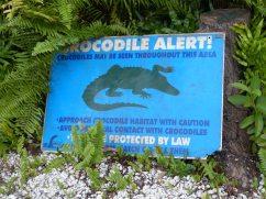 Jamaika-Black_River-Safari-Krokodil_Alert-1