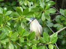 Jamaika-Black_River-Safari-Vogel-1