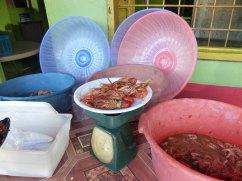 Jamaika-Landestypisches_Mittagessen-2