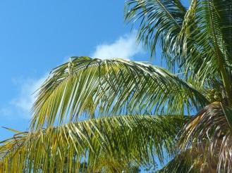 Jamaika-Palme-blauer_Himmel-1