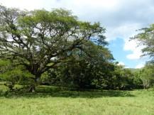 Jamaika-YS_Wasserfaelle-Park-1